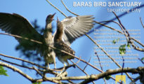 birdsanc