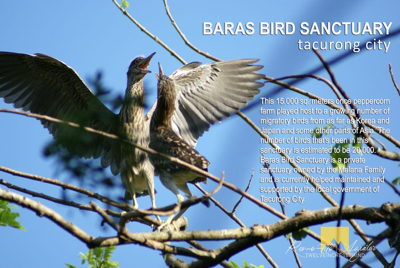 Post card from Baras Bird Sanctuary!